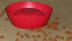 dog dish turned over and kibble scattered